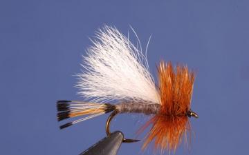 Dry Fly: Adam's Trude