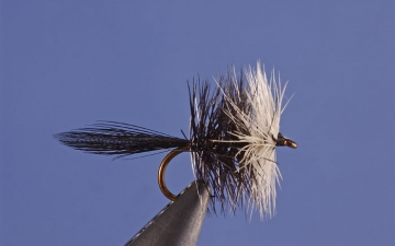 Dry Fly: Blk Bivisble