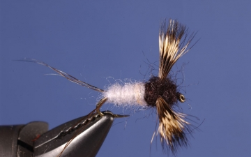 Dry Fly: Coffin Fly