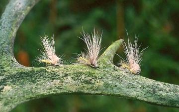 Dry Fly: Fragile Darters