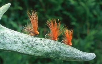 Dry Fly: Fragile Darters Dark