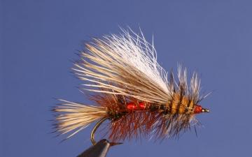 Dry Fly: Royal Stimulator
