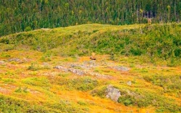 Newfoundland Hunting Area