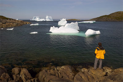 Man looks at the many icebergs in the bay