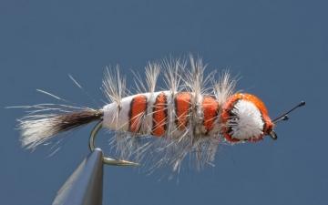 Bug: Snicky Orange