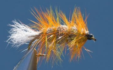 Bug: White Bug