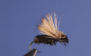 Dry Fly: Blk Fly Beetle