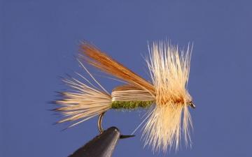 Dry Fly: Cream Saco Caddis