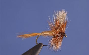 Dry Fly: Grey Fox