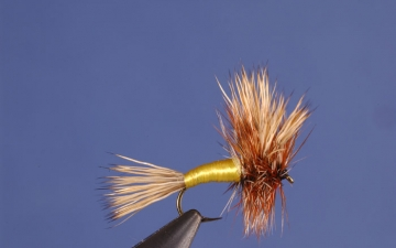 Dry Fly: Grizzly Wulff
