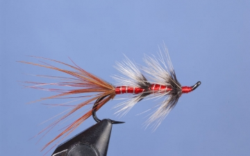 Hairwing: Curry's Red Shrimp