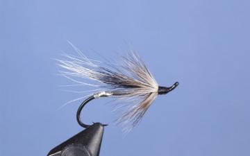 Hairwing: Grey Rat