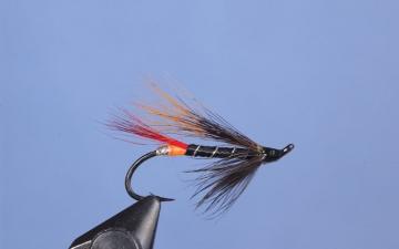Orange Butt Squirrel Tail