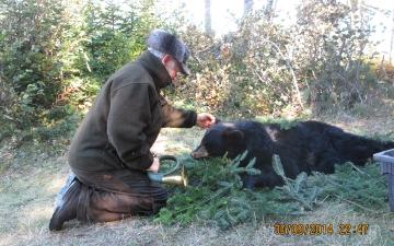 Black Bear Catch